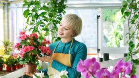 Nenechte mráz zničit květiny! Zazimujte balkonovky. Víme, kam která patří
