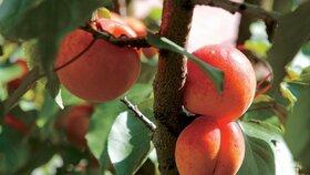 Ovoce plné slunce
