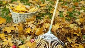 Zahrada v listopadu: Zakryjte rostliny a založte kompost