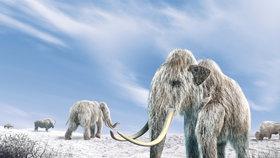 """Jako v Jurském parku? Vědci vzkřísí mamuty, první se má """"narodit"""" do 2 let"""