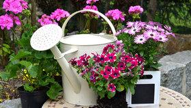 Přivolejte si jaro! Předpěstujte si květiny na okně