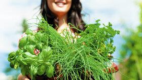 Prvotřídní zelenina a čerstvé bylinky? Už pro ně nikam chodit nemusíte!