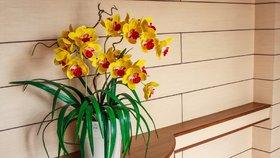 Jak se nejlépe postarat o orchidej, aby vám vydržela roky