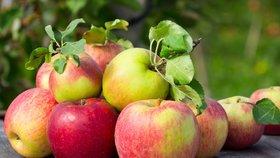 Jablka jsou plná bakterií, říkají vědci. Nejvíc jich je v čerstvém bio ovoci