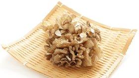 Léčivé houby porazí i jarní únavu
