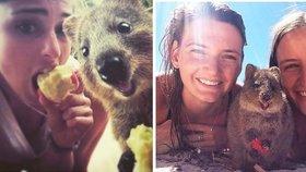 Selfie mánie s vačnatcem: Klokan Quokka je extrémně fotogenický