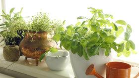 Sezona bylinek je za dveřmi: 7 největších chyb, kterým se při pěstování vyhněte