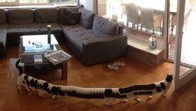 Stokočka v obýváku: Mňouká, má 16 nohou a baví se nad ní celý internet