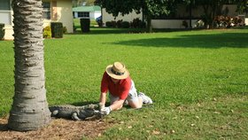Krokodýl na 11. jamce: Golfistovi prokousl nohu