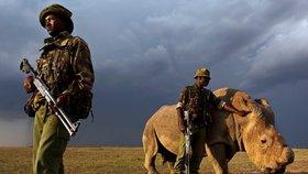 Strážci parků kříží cesty pytlákům. Zabitých nosorožců je nejméně za poslední roky