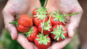 4 kroky, jak mít letos jahody sladké jako med