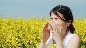 Alergie, nemoc moderní doby