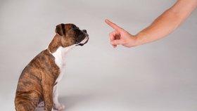 Máme doma psa: 5 rad, jak zvládnout výchovu štěněte!