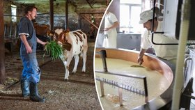 Mléko prudce zlevnilo, ale ne pro zákazníky! Slevy požírají supermarkety