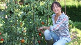 Jak mít bohatou úrodu rajčat? Nezapomeňte vylamovat výhonky!