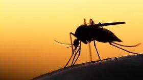 Odpuzovač komárů bez chemie: Připravte si domácí repelent!