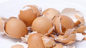 9 tipů, jak využít skořápky od vajec. Vyléčí bodnutí hmyzem i vybělí oblečení