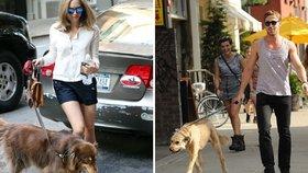 10 hvězdných pejskařů aneb jakého psa má Anne Hathaway a jakého Karel Gott?