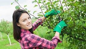 Srpen na zahradě: Vysázejte nové jahodníky, prořežte stromy a pohnojte trávník