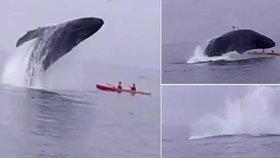 Kajakáře málem rozplácla velryba, smrti unikli jen o ploutev