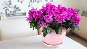 5 pokojových rostlin, které vám doma asi nevydrží. U sebe chybu nehledejte!