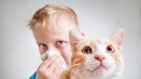 Bydlení s alergikem: Základem je pravidelný úklid