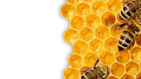 Včelám se daří i na Hradě. Nevěříte?