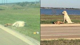 Láska až za hrob: Pes odmítal opustit tělo mrtvé kamarádky