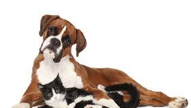 Plánujete si pořídit mazlíčka? Výhody a nevýhody zvířete z útulku i od chovatele