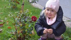 Příroda se zbláznila? Kvetou růže a o víkendu přijde jaro