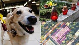 Psy, hroby i nemovitosti: Co všechno můžete mailem koupit od státu?