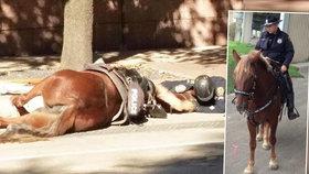 Parťáci až za hrob: Policista dojemně utěšoval svého umírajícího koně