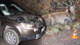 Jelen vběhl pod kola škodovky: Parohy prorazily čelní sklo