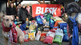 Pamlsky, pelíšky i krmení. Opuštění psi a kočky dostali dárky od Blesku