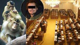 Bombou hrozil českým poslancům i makakům. Anonym přitom mluvil o Islámském státu