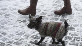 Kašlající psi chodí po Praze: Kde všude se váš mazlíček může nakazit zákeřnou nemocí?
