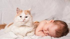 Sebepoškozování a škrábání. Co dělat, když váš domácí mazlíček žárlí?