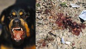 Dva rotvajleři v Ostravě zabili psa přímo před očima tří dětí: Někdo mi ukradl plot, tvrdí majitel
