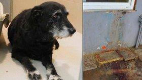 Muž s tuberkulózou visel v Plzni z okna a vykrvácel z plic: Zůstal po něm pes
