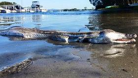 Monstrum z pravěku! V Austrálii vyvrhlo moře na břeh neznámou příšeru