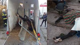 Hasiči z Nýřan zachraňovali koňský život: Byl děsivě zaklíněný v přívěsu
