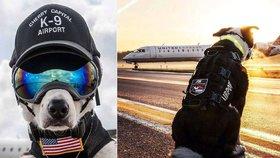 Letiště v USA střeží čtyřnohý krasavec: S tímhle ostříleným psem si raději nezahrávejte!