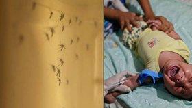 Slováci hlásí první podezření na virus zika. Žena se vrátila z Jižní Ameriky