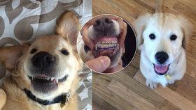 Pes s rovnátky? Roztomilé štěně se stalo hitem internetu!