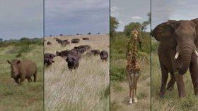 Prohlédněte si safari z pohodlí domova: Google vás vezme na virtuální prohlídku do Afriky