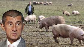 Menší zemědělci lamentují nad nouzí o dotace. Agrofert tvrdí, že za to nemůže
