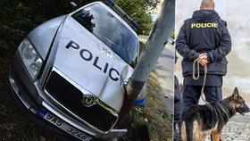 Policejní psovod zemřel po nehodě v nemocnici: Jeho pes Gint ho oplakává