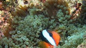 Velký bariérový útes odumírá: Korály blednou kvůli oteplování, zmizí potápěčský ráj z mapy?
