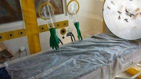 V Česku je čtvrtý případ viru zika. Žena se vrátila nakažená z Martiniku