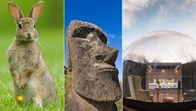 Kuriózní sváteční cestování: Velikonoční ostrov, země králíků, či bydlení ve vajíčku!